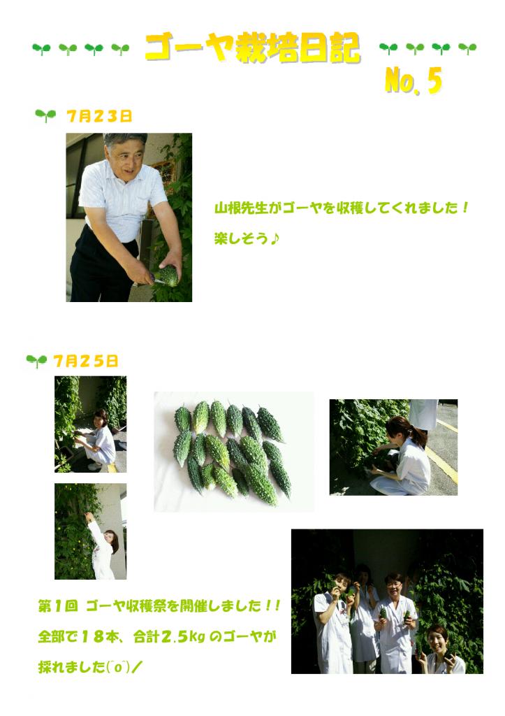 ゴーヤ栽培日記⑤-001